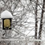 ウグイスの冬の間の鳴き声はどんな鳴き声?