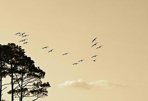 ウグイス 渡り鳥