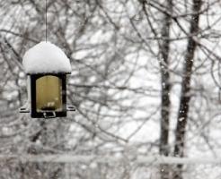 ウグイス 冬 鳴き声