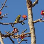 どっちが早い?梅の開花とウグイスの飛来する季節!