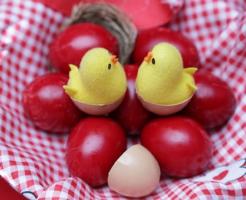 ウグイス 産卵期