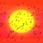 ウグイスは群れで行動する野鳥なのか?